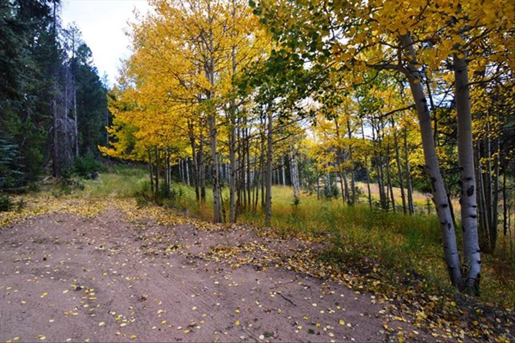 7569 Whispering Brook Trl, Evergreen, CO 80439